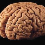 El cerebro bloquea la formación de nuevas memorias al despertar