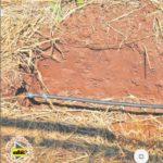 De Israel a Paraguay: Sistema de riego subterráneo