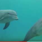 Arrecife de Delfines en Eilat