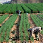 Israel, la nación que desarrolló una próspera agricultura en medio del desierto
