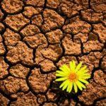 Judaísmo: 5778 Años De Tradición Y Resiliencia