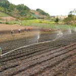 Guatemala busca apoyo de Israel en el manejo de agua para incrementar la producción agrícola del país, como parte de las estrategias para incentivar la economía