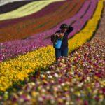 Israel, un paradigma tecnológico de la agricultura mundial