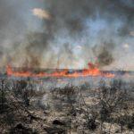 Cometas incendiarias de Gaza asolan una reserva natural al sur de Israel