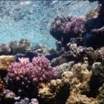 Israel forma una raro asociación con las naciones árabes para proteger los corales del Mar Rojo