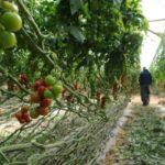 El futuro de la agricultura de Israel llama la atención internacional