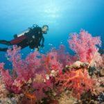 La diplomacia del coral que acerca a Israel a sus vecinos árabes