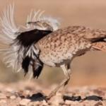 El refugio de Jerusalén para las aves migratorias celebra su 25 aniversario