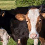¿Carne sí o carne no? Un experto israelí propone mirar al pasado para decidir mejor