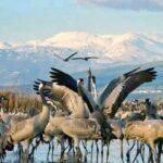 La migración de aves en un lago del norte deslumbra a Israel