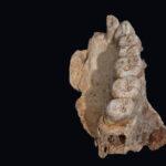 Humanos prehistóricos migraron desde África hacia el moderno territorio de Israel en la Era del Hielo: estudio
