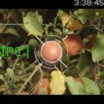 Un «robot volador» israelí para recoger frutas de los árboles