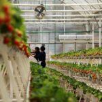 Soluciones de Israel lideran el cultivo de verduras en interiores