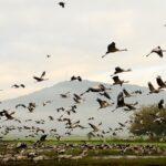 Una guía de las aves más increíbles de Israel