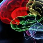 La Universidad de Tel Aviv revela un avance en la cura del cáncer de cerebro