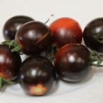 El tomate negro israelí gana el máximo premio en AgroMashov 2021