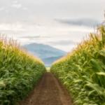 Jordania e Israel firman acuerdo agrícola para el año shmita