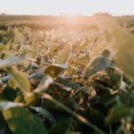 Una empresa de Israel crea los cultivos que necesitamos